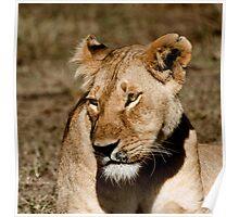 The Lioness - Masai Mara Safari Poster