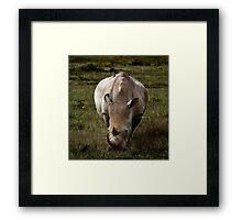 Rhino - Masai Mara Framed Print