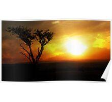 Sunrise Tree - Masai Mara Poster