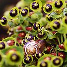 spot the snail... by bared