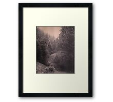 Pines in Lincoln National Forest, New Mexico. Framed Print