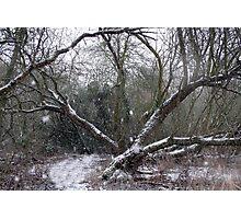 Eerie winter wonderland Photographic Print