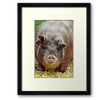 Happier Than A Pig In Slop! Framed Print