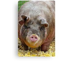 Happier Than A Pig In Slop! Canvas Print
