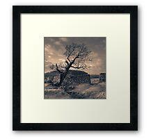 Leaning Tree, Bradgate Park Framed Print