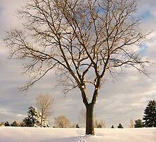 Trail of Winter by Thomas Stevens