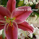 Season's Greetings by Maggie Hegarty