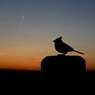 Cardinal in Silhouette by Larry Trupp