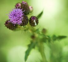 Fuzzy Thistle by Themossgirl
