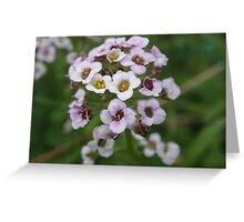 Small bunch of flowers Greeting Card