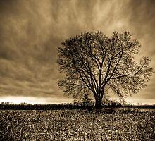 Desolation by Brandon Hayes