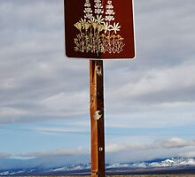 The Signpost Up Ahead by Ron Hannah