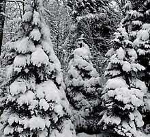 Winters Wonder 2 by Christopher Keough
