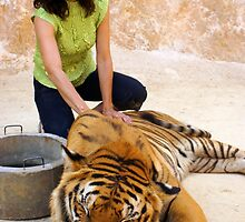 TIGER TRAFFICKING by Betsy  Seeton