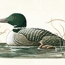 Canadian Loons - realistic animal portrait by LindaAppleArt