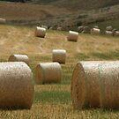 Hay Bales by Denny0976