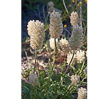 Geelong Botanic Gardens Photographic Print