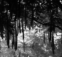 Hakone Gardens, Saratoga, California. A Plant with Pods in Black and White. 2008  by Igor Pozdnyakov