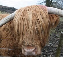 Hamish the Hairy Coo by Erica Morse