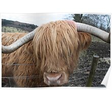 Hamish the Hairy Coo Poster