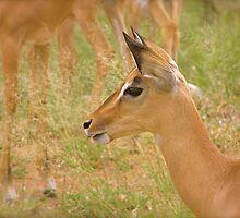 alert impala by mamba