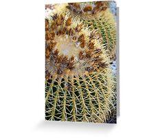 Golden Barrel Cactus, Geelong Botanic Gardens Greeting Card