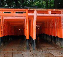 Torii, Fushimi Inari Taisha Temple, Kyoto  by jojobob