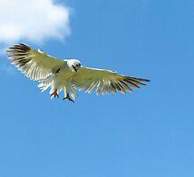 Aerial Hunter by Macky