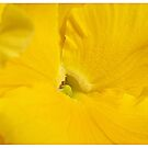 Yellow  by shararat