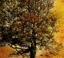 A Tree at Antony by Catherine Hamilton-Veal  ©