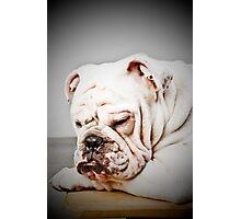 English Bulldog Photographic Print