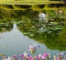 Irises in Imperial Palace Gardens  by jojobob