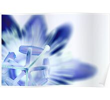 Inverted Passion Flower Poster
