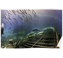 A school of young barracudas Poster