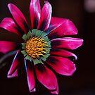 Wild flowers  by Rosemaree