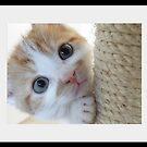 Cutiepie by Yool