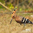 bird 1 by Tony Wong