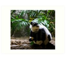 Ring-tailed Lemur Art Print