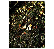 Fallen leaves in the grass Photographic Print