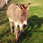 Donkey on a could sunny day by Smaragd