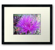 Gentle flower. Framed Print