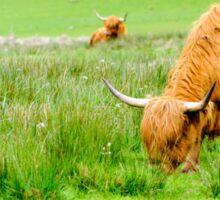 Scottish Highland Cows Sticker