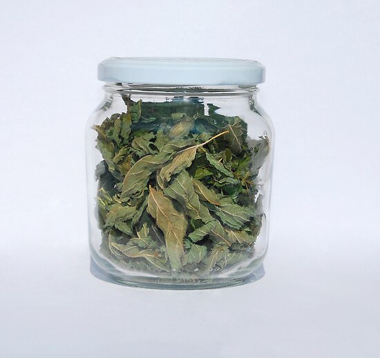 Dried Peppermint In Jar   by jojobob