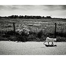 Dog walk by Wouter Brandsma