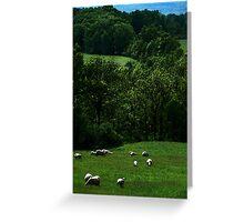 Sheep on Seneca Greeting Card