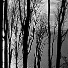 Through the Trees by JimJohnson