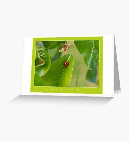 Macro: Beautiful  Nature - 2 Greeting Card