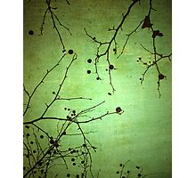 Green Simplicity Photographic Print