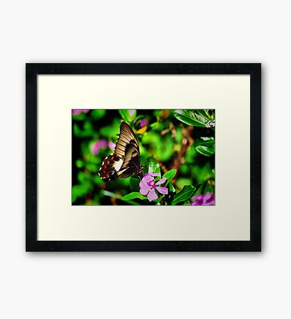 Butterfly At Dinner Framed Print