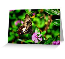 Butterfly At Dinner Greeting Card